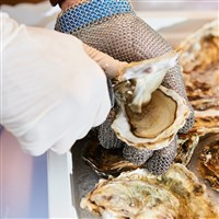 Falmouth Annual Oyster Festival - £25